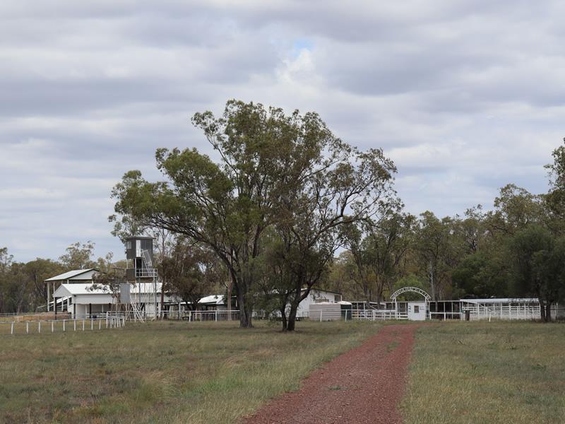 Horse Races at Warra