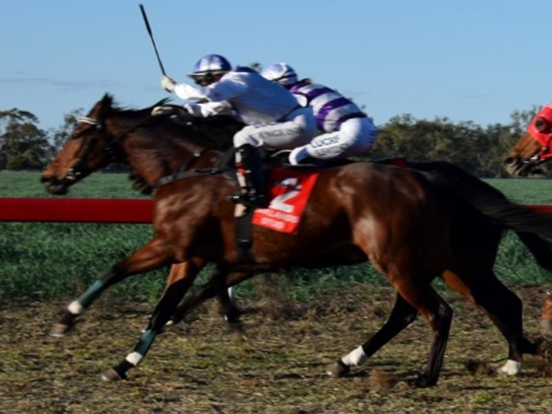 Warra Horse Races in July